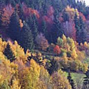 Colored Landscape Poster