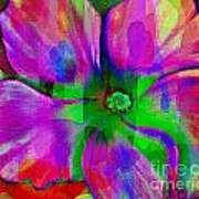 Colorful African Violet Poster