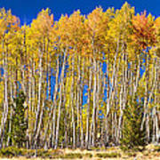 Colorful Aspen Panorama Poster