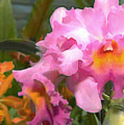 Colorful Assorted Cattleya Orchids Poster