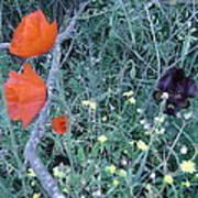 Colorful Bouquet Poster