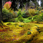 Colorful Carpet Of Moss In Benmore Botanical Garden Poster