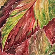 Colorful Coleus Poster