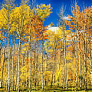 Colorful Colorado Autumn Aspen Trees Poster