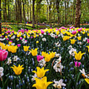 Colorful Corner Of The Keukenhof Garden 1. Tulips Display. Netherlands Poster
