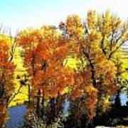Colorful Cottonwoods Poster