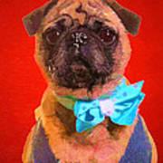 Colorful Dapper Pug Poster