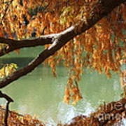 Colorful Fall Bald Cypress Poster