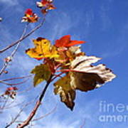 Colorful Fall Leave's With Blue Sky Poster
