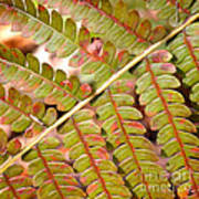 Colorful Fern Square Poster