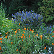 Colorful Flowers Along The Trail Poster