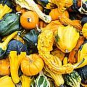 Colorful Gourds  Poster