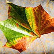 Colorful Leaf On The Ground Poster