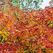 Colorful Leaves In Autumn Poster