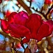 Colorful Magnolia Blossom Poster