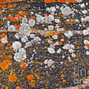 Colorful Moss Spots On A Gneiss Rock Poster