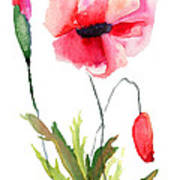 Colorful Poppy Flowers Poster