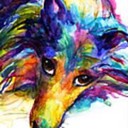 Colorful Sheltie Dog Portrait Poster