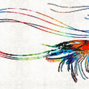 Colorful Shrimp Art By Sharon Cummings Poster