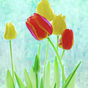Colorful Spring Tulip Flowers Poster