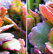Colorful Succulents In Stereo Poster