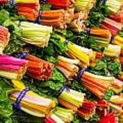 Colorful Swiss Chard Poster