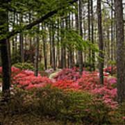Colorful Woodland Azalea Garden Poster