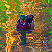 Colorful World Of Wood Duck Poster