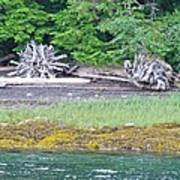 Colors Of Alaska - Layers Of Greens Poster