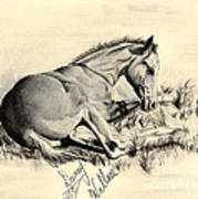 Colt Laying In Grass Poster