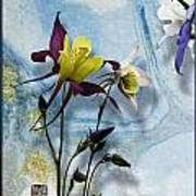 Columbine Blossom With Suminagashi Ink Poster