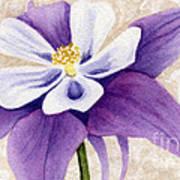 Columbine In Violet Poster by Vikki Wicks