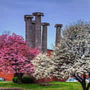 Columns And Dogwood Trees Poster