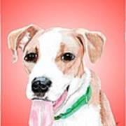 Comet A Former Shelter Sweetie Poster