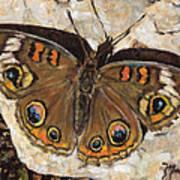 Common Buckeye Poster