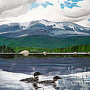 Common Loon On Togue Pond By Mount Katahdin Poster