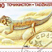 Common Wonder Gecko Lizard Poster