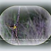 Common Yellowthroat - Bird Poster