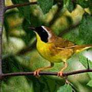 Common Yellowthroat Warbler Poster