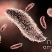 Conceptual Image Of Paramecium Poster