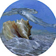 Conch And Ladyfish, 2001 Pair Poster