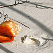 Conch With Shell In Sand I Poster