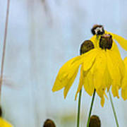 Coneflower And Bee 2  Poster