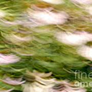 Coneflowers In The Breeze Poster by Paul W Faust -  Impressions of Light