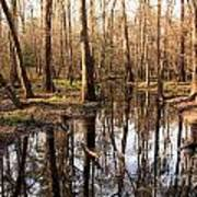 Congaree Reflections Poster