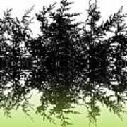 Conifer Lime Poster