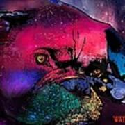 Contemplative Boxer Dog Poster