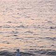 Contemplative Seagull Poster