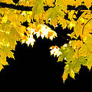 Contrast Of Autumn, Quincy California Poster