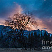 Cooks Meadow Oak At Sunset Poster